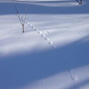 Vermont footprints