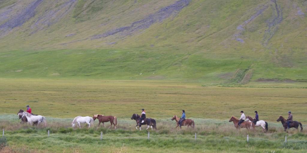 IcelandHorses - 1